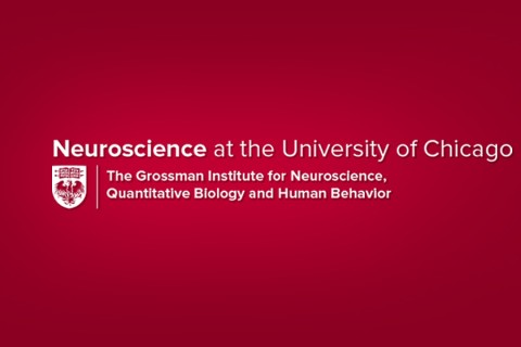 Grossman Institute @ University of Chicago Drupal Website Redesign